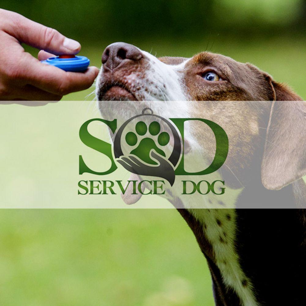 Realizzazione sito web per centro cinofilo: addestramento cani ad arezzo
